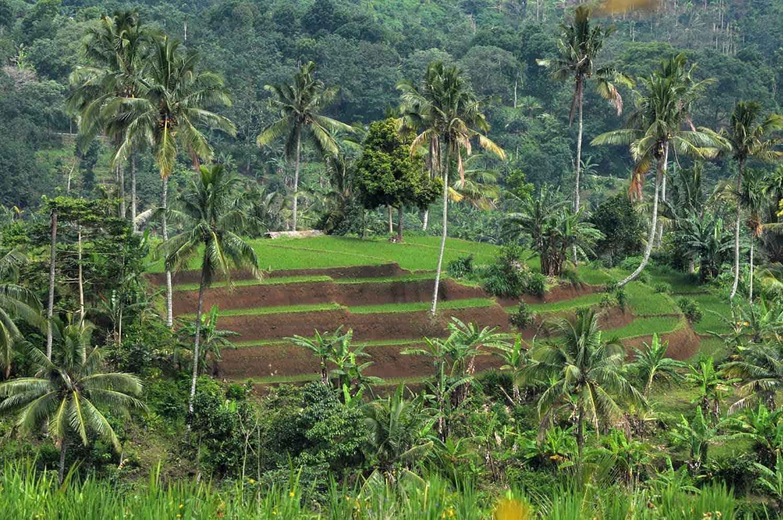Authnetic Lombok Tour